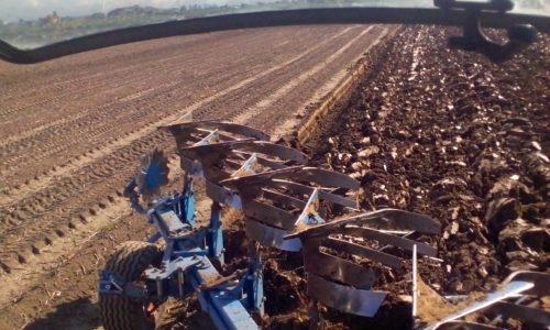Schööönheit vergeiht Hektar besteiht